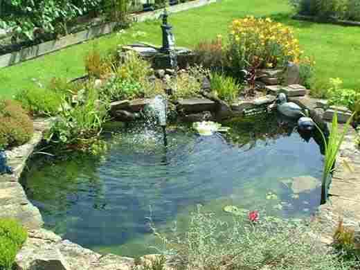 Tunbridge wells garden pond construction kent tn1 tn2 tn3 tn4 for Garden pond upkeep